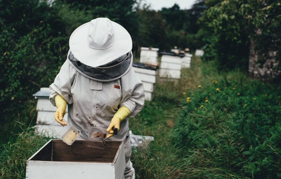 Bee keeping at work. Photo: pexels.com